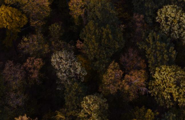 Birds-eye view of an autumnal forest