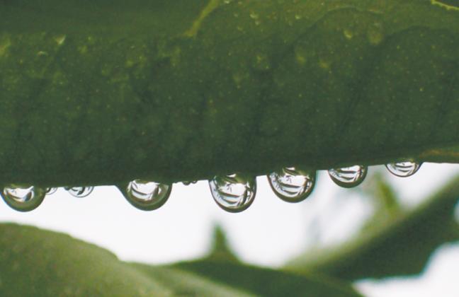 Close up of dew on green leaf