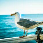 Shot of seagull